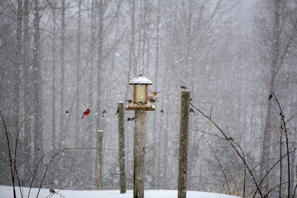 Several birds are feeding around a bird feeder during a heavy snow. There is a red cardinal and some other birds on and sitting on a wire beside the feeder, in the background you can see the heavy snow with many trees of a forrest in the background. A very scenic and tranquil scene of winter and some lucky birds.